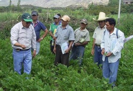 Agricultores campo