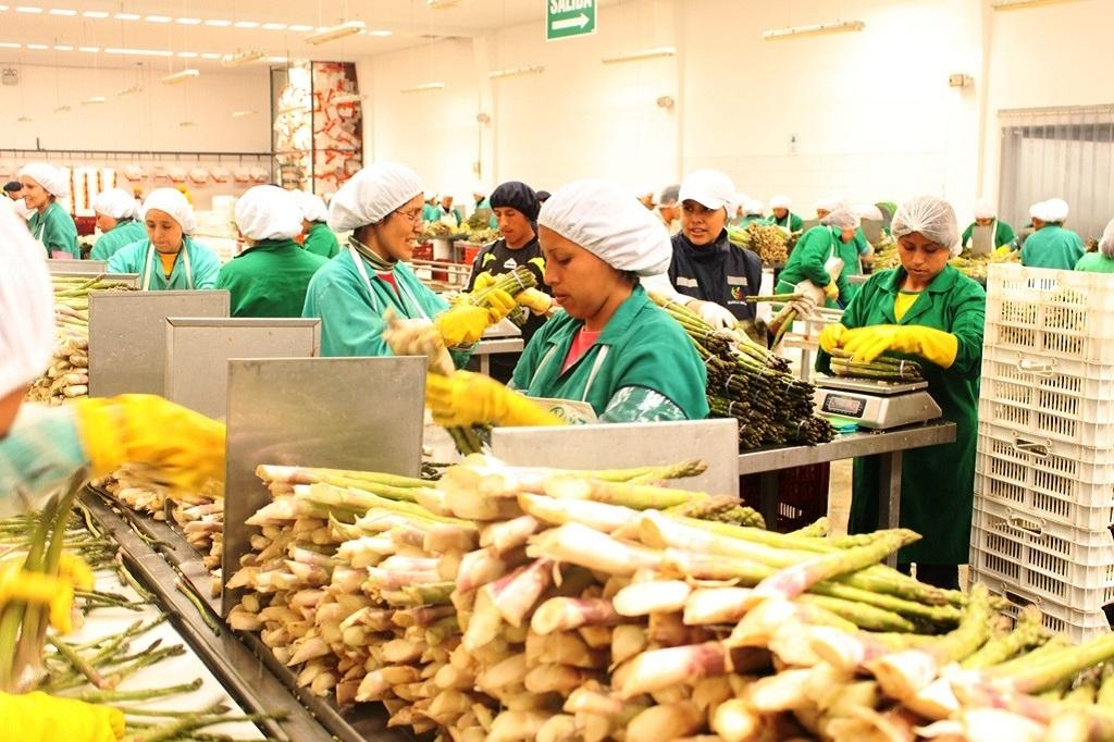 Proceso de producción para exportación