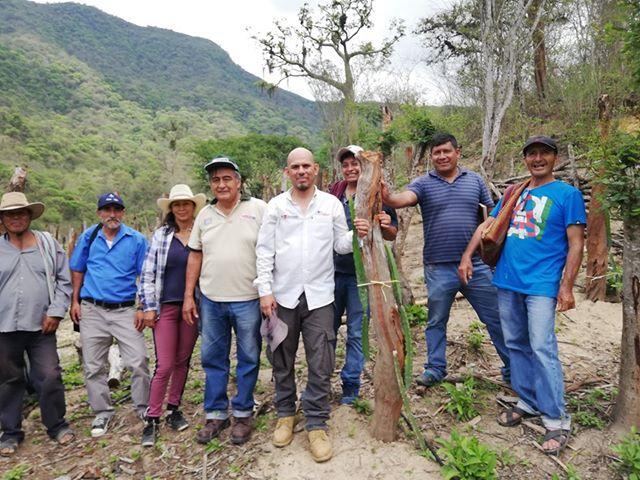 Promueven cultivo de fruta pitahaya en la sierra del departamento de Piura