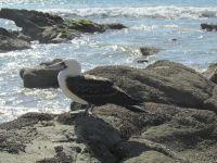 Litoral-Piurano-Cabo-Blanco